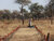 UNMAS implementing partner, The Development Initiative, conducts manual mine clearance in Koladit, Abyei, after two incidents of cattle killed by anti-tank mines in the area. UNMAS/Irina Punga
